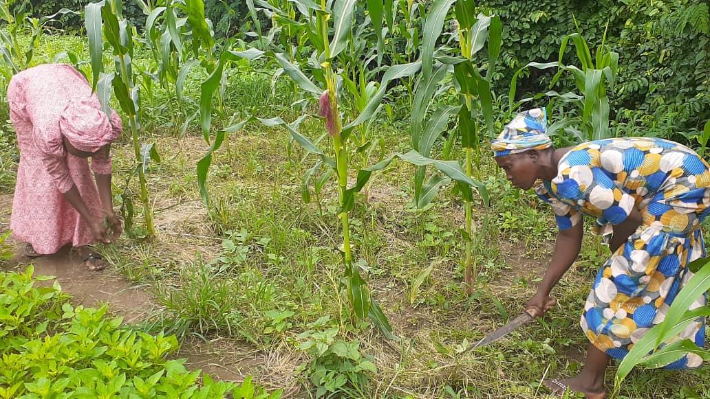 Smallholders women farmers