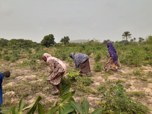 Oyo women farmers