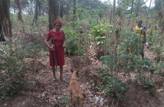 Two small scale women farmers on their farm at Ufuma Orumba North-LGA